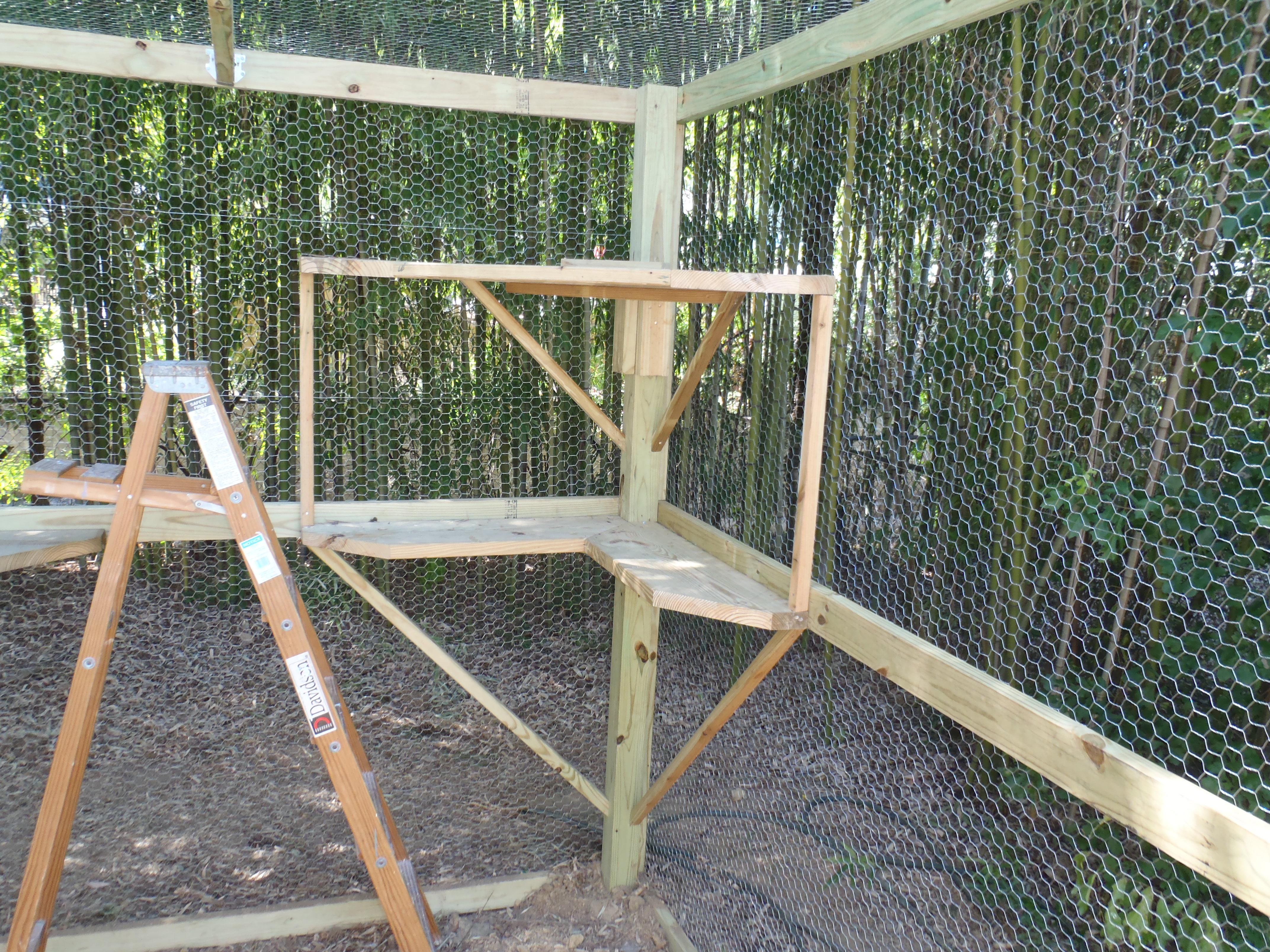 Ladder and shelves for the cats to play on
