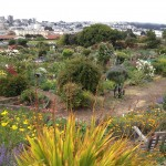 The Fort Mason Community Garden in San Francisco