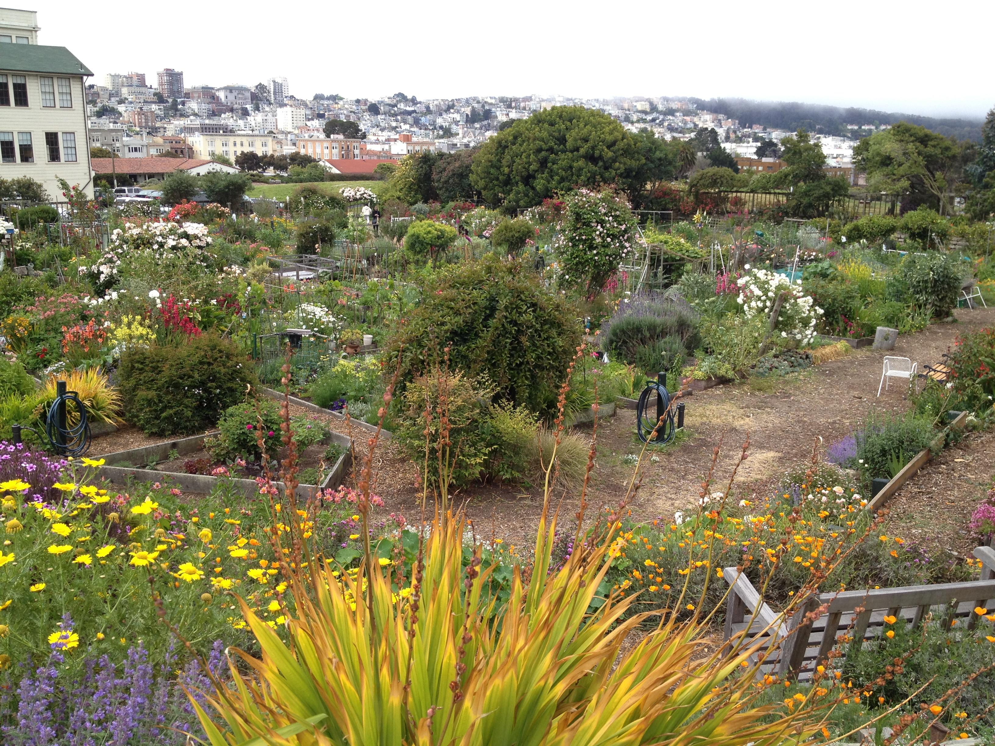 The Fort Mason Community Garden in San Francisco