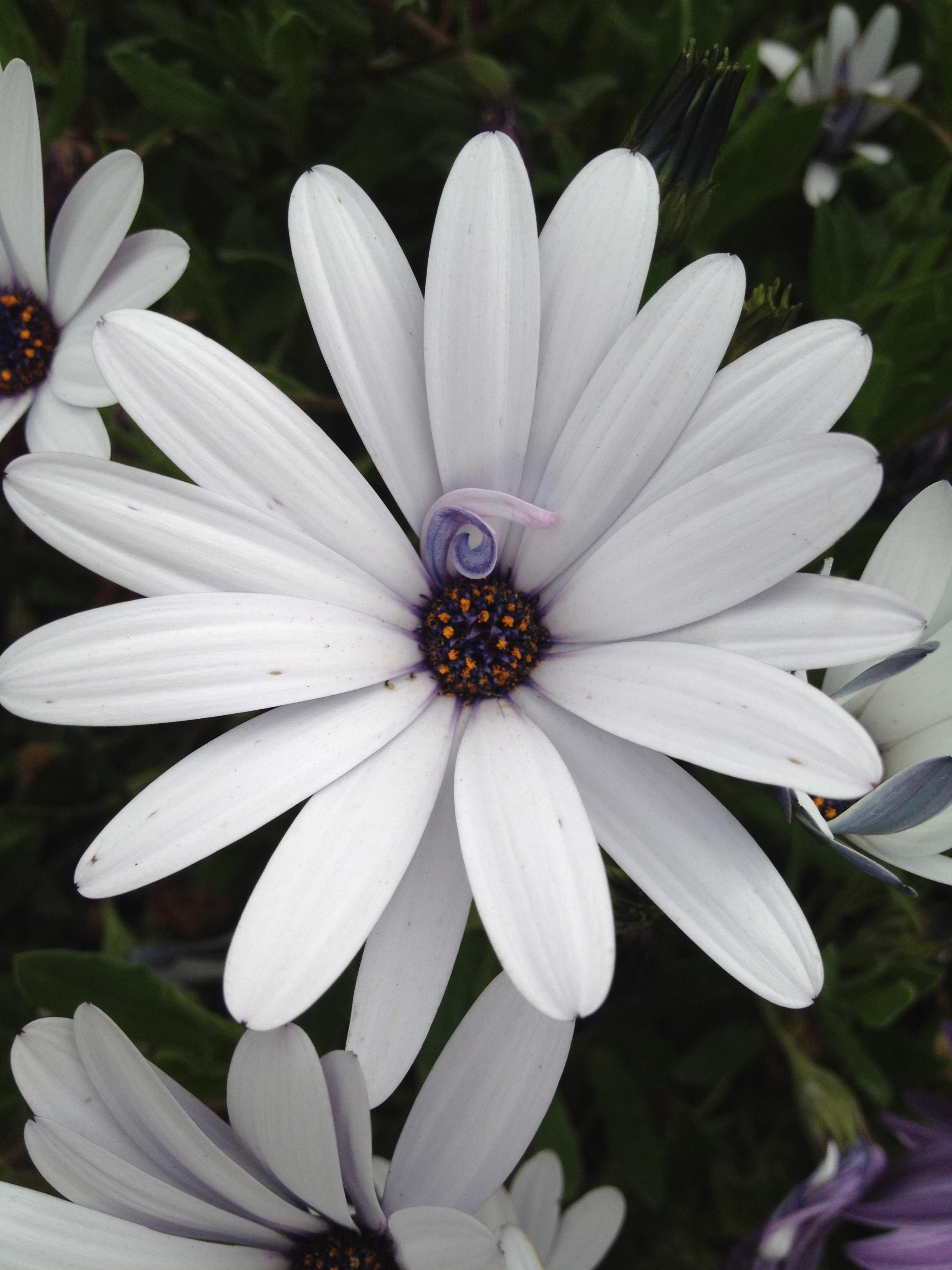 Precious flower at the Fort Mason Community Garden, overlooking San Fran